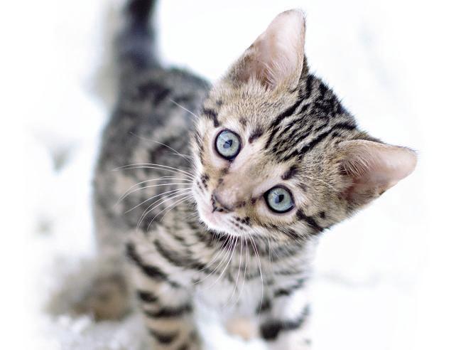 In Friuli Venezia Giulia microchip obbligatorio anche per i gatti