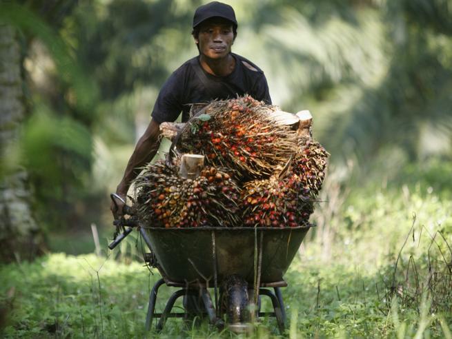 Abbordano una   nave che trasporta olio di palma: sei attivisti in arresto