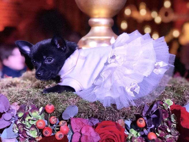 bf728d5d1d1d Cani da sposa