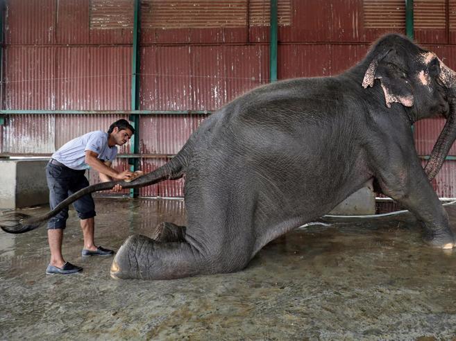 Così si cura un elefante ferito foto Ecco l'ospedale per pachidermi