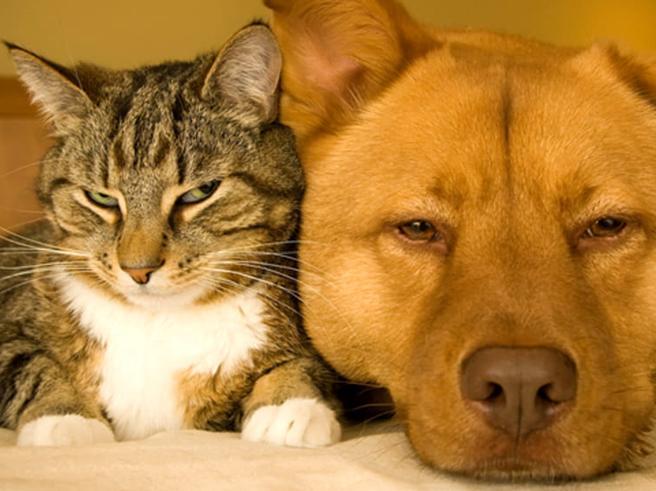Ecco Il Banco Farmaceutico Per Cani E Gatti In Italia La Prima