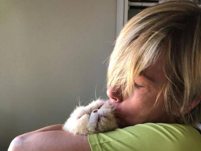 Adottare Un Gatto Servono Sopralluoghi Colloqui Con I Futuri