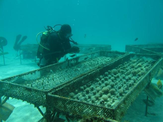Allevare spugne e coralli a Zanzibar, dove il pesce non c'è (quasi) più