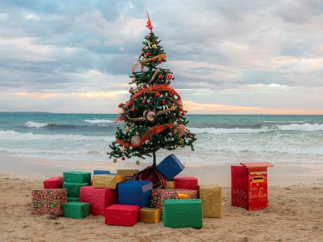 Nel Salento l'albero di Natale si fa in riva al mare