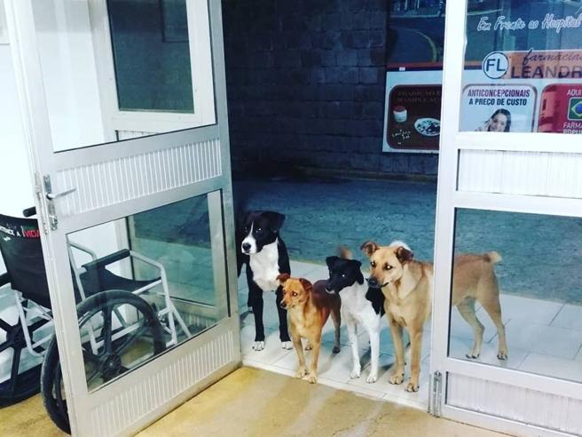 Senzatetto ricoverato: i suoi cani lo aspettano fuori dall'ospedale