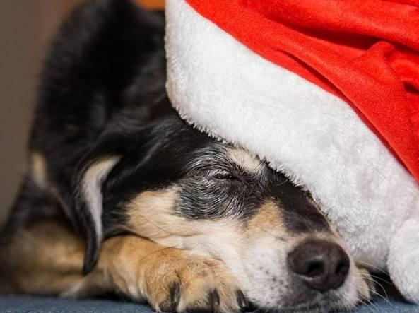 Foto Di Natale Con Cani.Natale E Feste Con Cani E Gatti Niente Dolci E Attenzione A