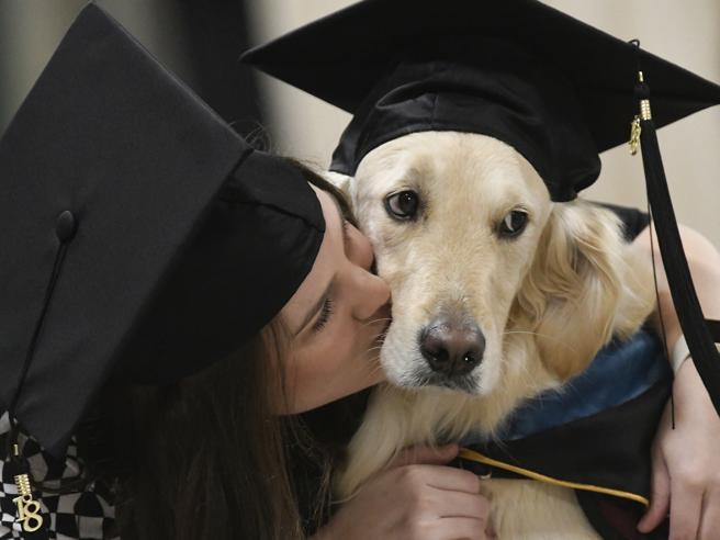 Laurea Ad Honorem Per Il Cane Griffin Che Ha Aiutato L
