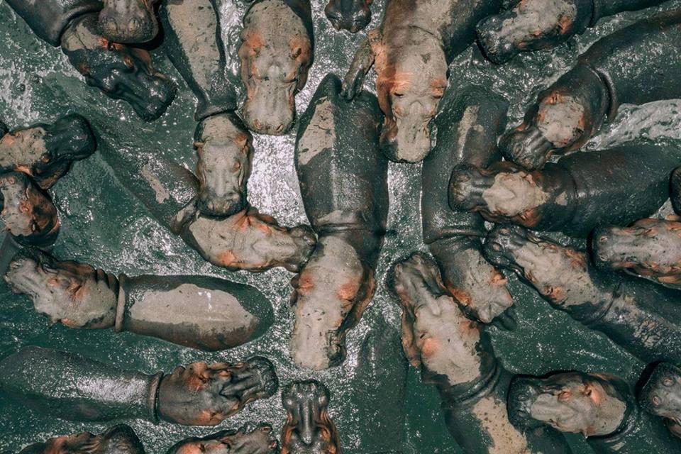 Ippopotami nel fango e camion ribaltati: le più belle foto scattate da un drone