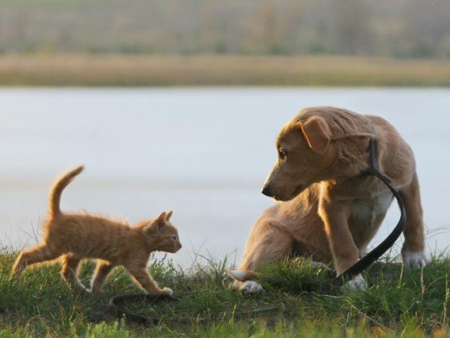 Cani e gatti, la convivenza possibile Basta trovare il giusto linguaggio