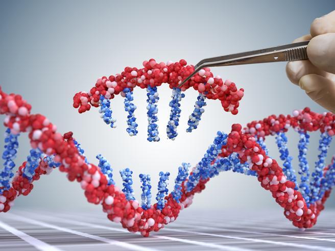 0ee1488850 Create le prime cellule staminali «invisibili» al sistema immunitario