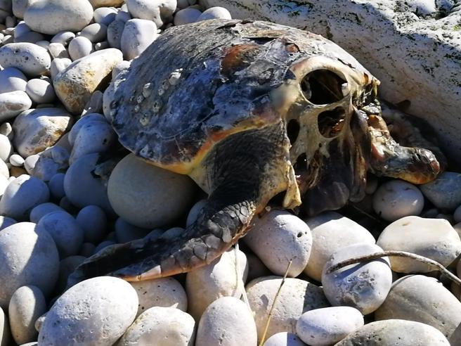 Il mistero delle tartarughe decapitate, giallo in Puglia