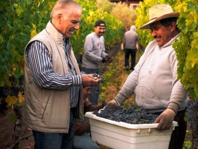 L'argentino che trasforma una cava di Bolgheri in una super cantina