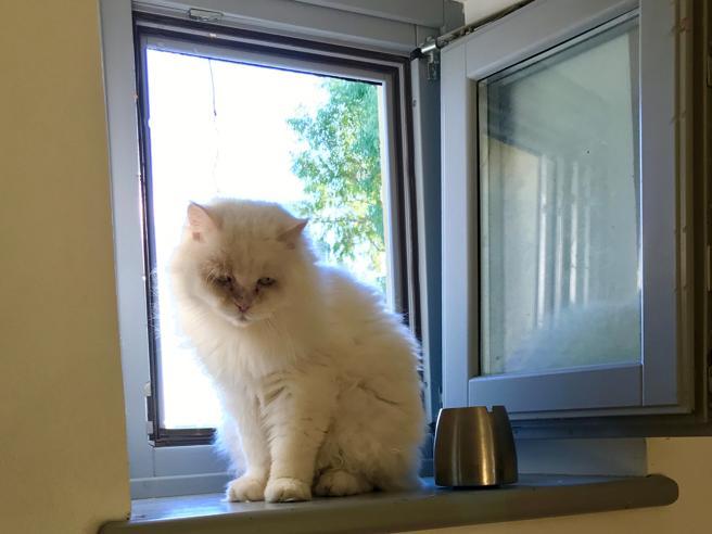 Zio Ray, il gatto che andava a caccia di carezze (e sempre le otteneva)