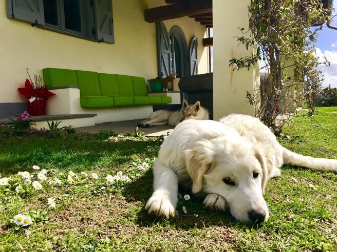 Campioni di naso: perché i cani hanno un fiuto eccezionale