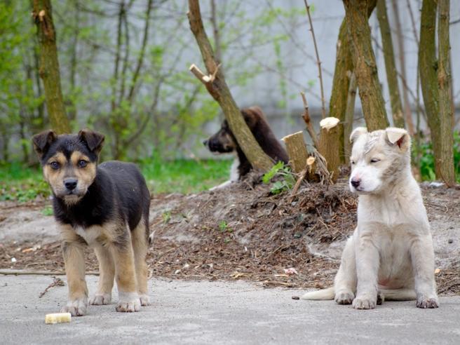 I Cuccioli Di Cernobyl Finalmente Adottati E Altre Storie Di