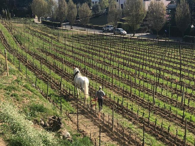 Cavalli nelle vigne,  bollicine al galoppo  in Franciacorta