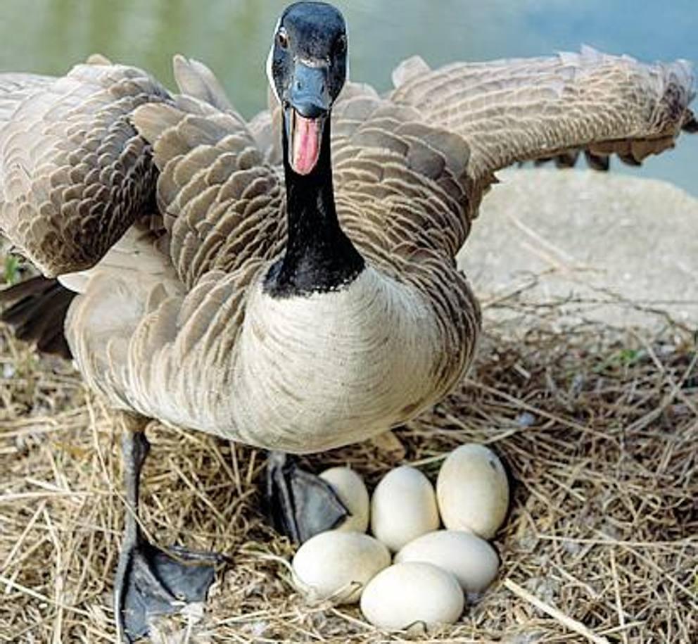 145b31658c Sorprese nell'uovo, quel che non si vede (spesso) degli uccelli ...