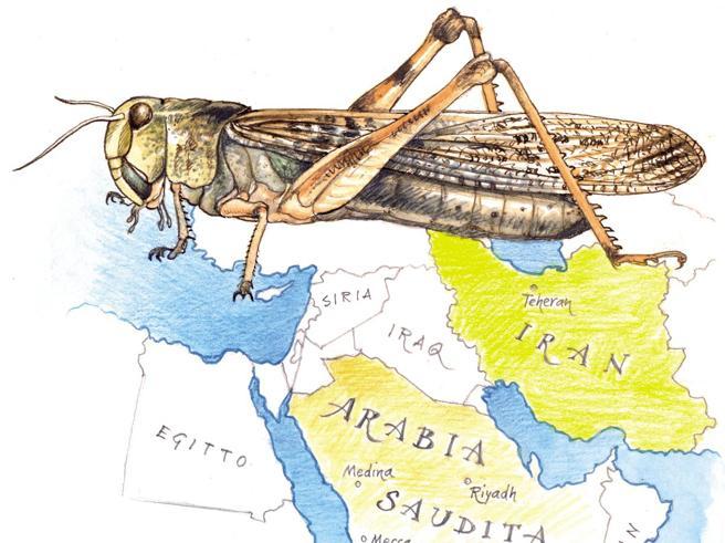L'invasione delle locuste come «arma segreta»: Teheran accusa i sauditi