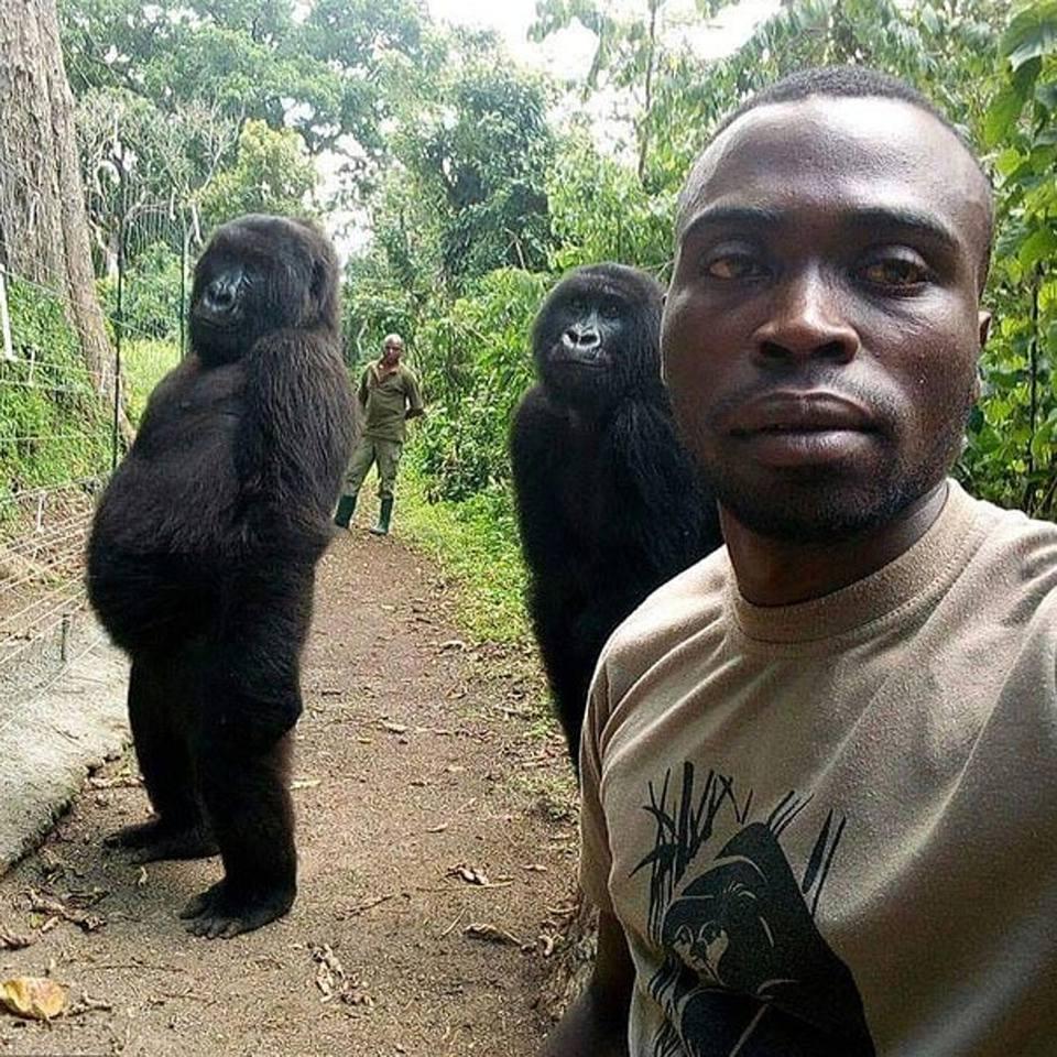 Un ranger (e i suoi amici gorilla)