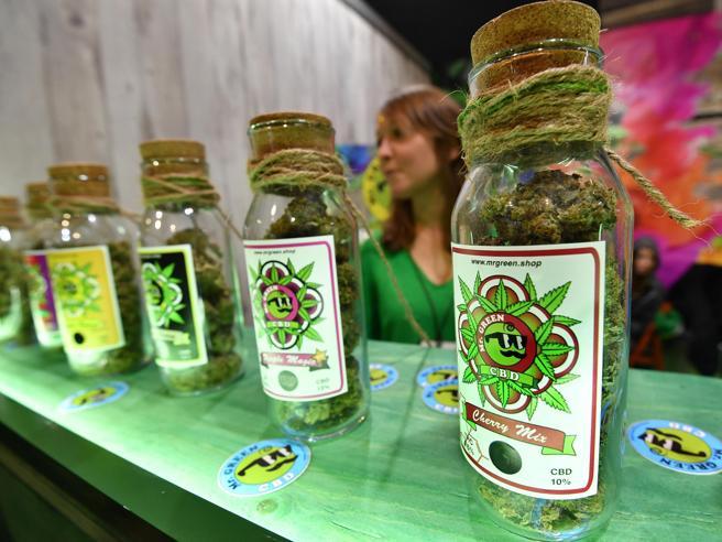 Salvini contro la cannabis light.  Si può fare? Cosa dice la legge (e la Cassazione) Di Maio: si occupi delle piazze di spaccio