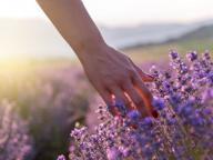 Curarsi con le piante: qui trovate tutte le risposte alle vostre domande