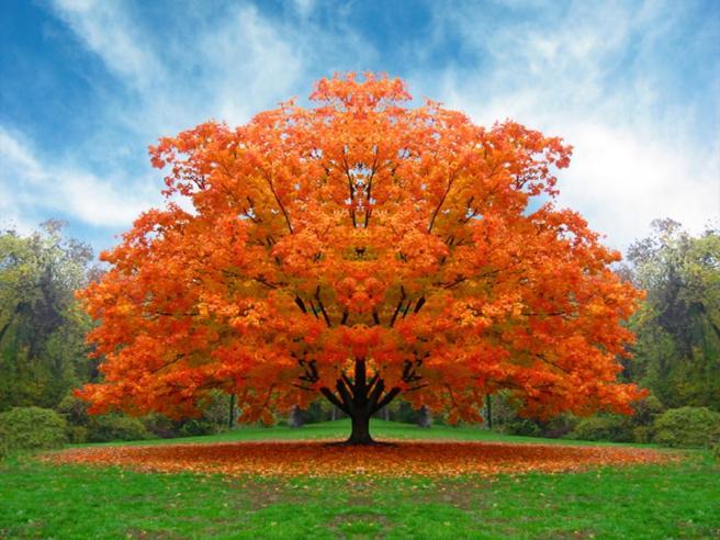 Quelli che non sprecanoUna «gara» per gli alberi