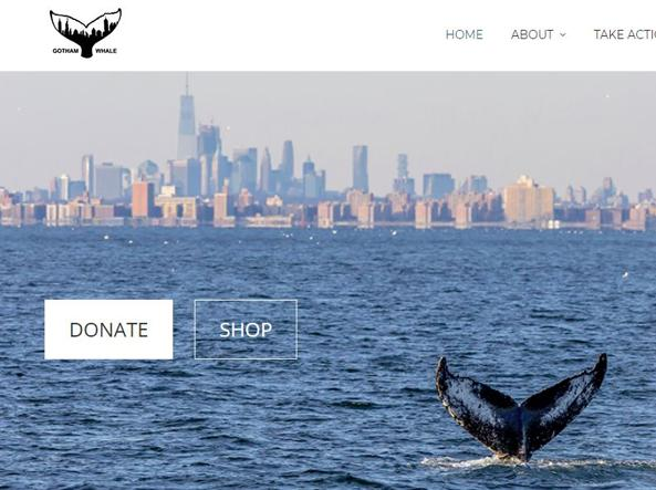L'homepage dell'associazione Ghotam Whale