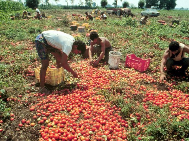 Sicilia: migranti raccoglievano pomodori nelle serre per 4 euro.