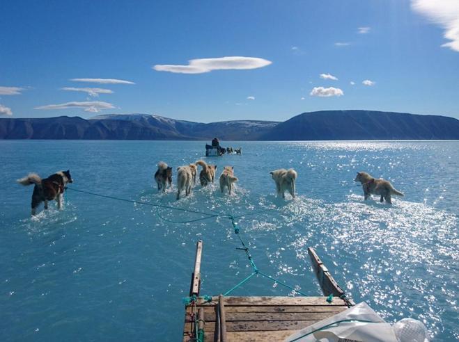 Groenlandia, slitta trainata sull'acqua: lo scioglimento dei ghiacci in una foto