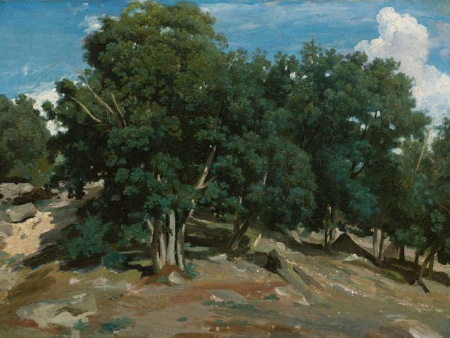 Il premio Pulitzer Richard Powers: «Ecco perché credo negli alberi»