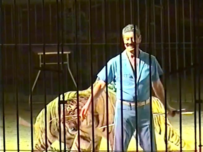 Ettore Weber, ucciso dalle tigri: la moglie ha visto l'assalto. E i figli gli dicevano: &laquoSmetti»
