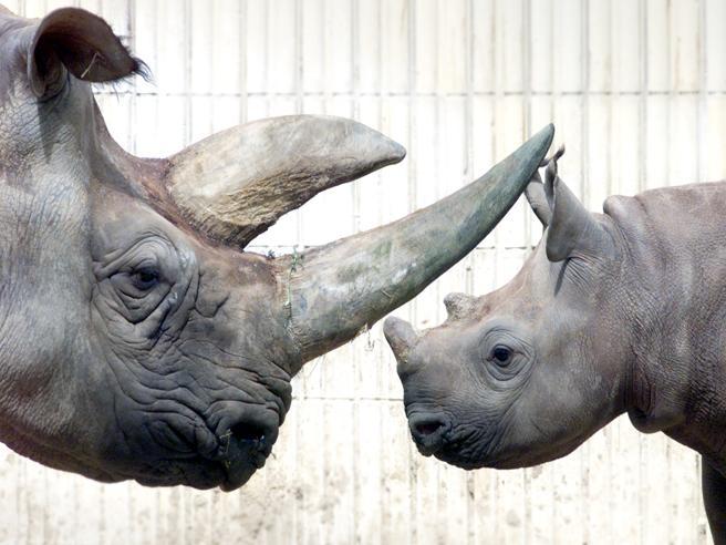 Finanza e ambiente, ecco il bond-rinoceronte: cedola se gli animali aumentano