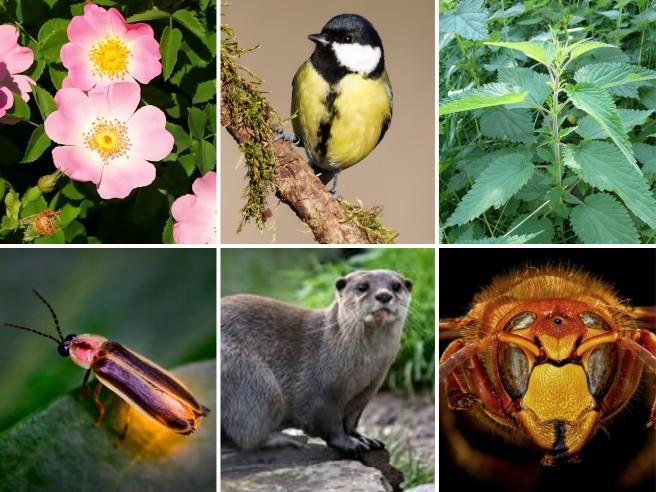 Passero o picchio? Sapete riconoscere questi animali e queste piante (comuni)   Provate