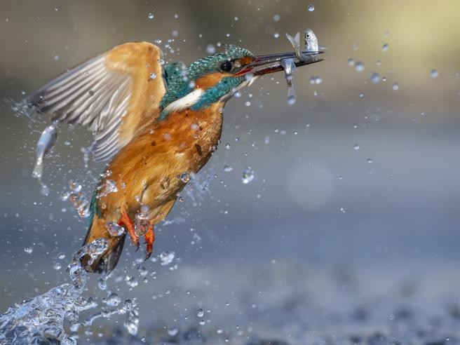 C'è una caccia che non uccide: Oipa lancia «One shot, no kill»