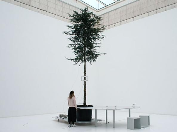 Agnes Meyer-Brandis, «One tree ID — how to become a tree for another tree»