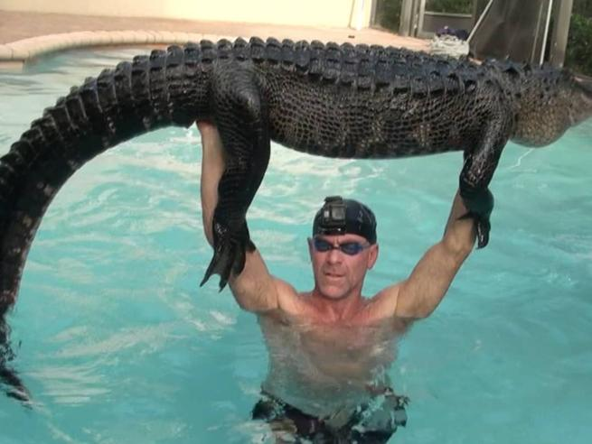 Florida, alligatore in piscina: la cattura è spettacolare