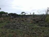 Grosseto, tromba d'aria devasta l'oasi di Duna Feniglia. «Abbattuti oltre mille pini marittimi»