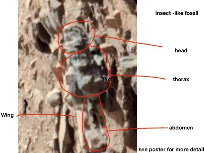 Marte, l'annuncio dell'entomologo William Rosomer: «Insetti e serpenti sul pianeta rosso»