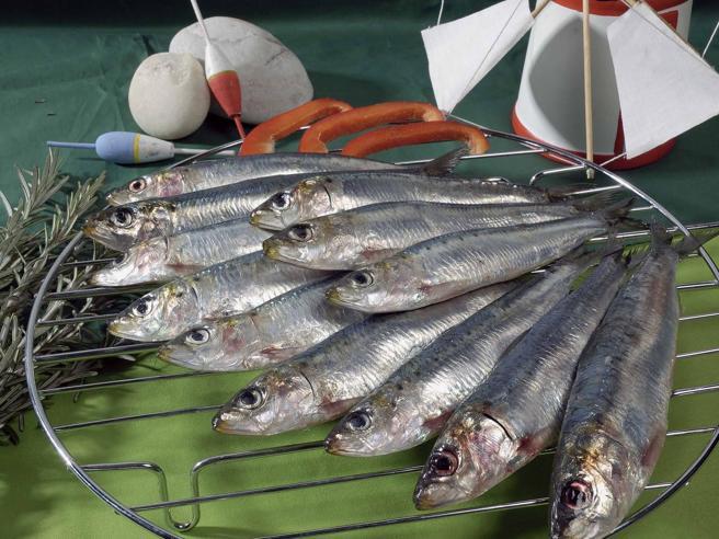 Gli italiani comprano più sardine: la domanda è aumentata del 10%
