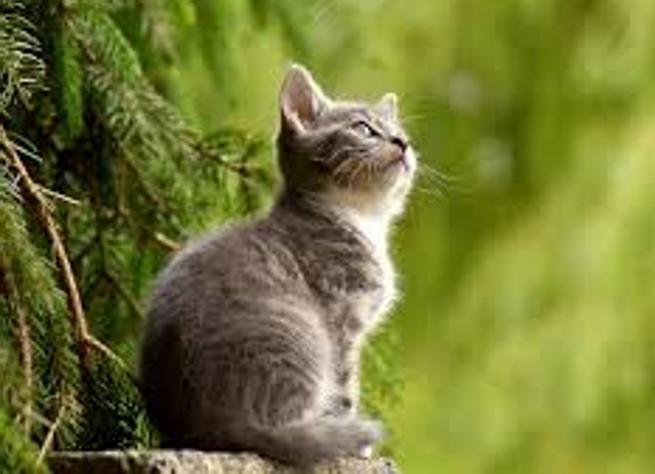 L'obbligo di microchip per i gatti? È una «scelta» di buonsenso