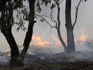 Australia, Barilla sostiene il Wwf per l'emergenza incendi