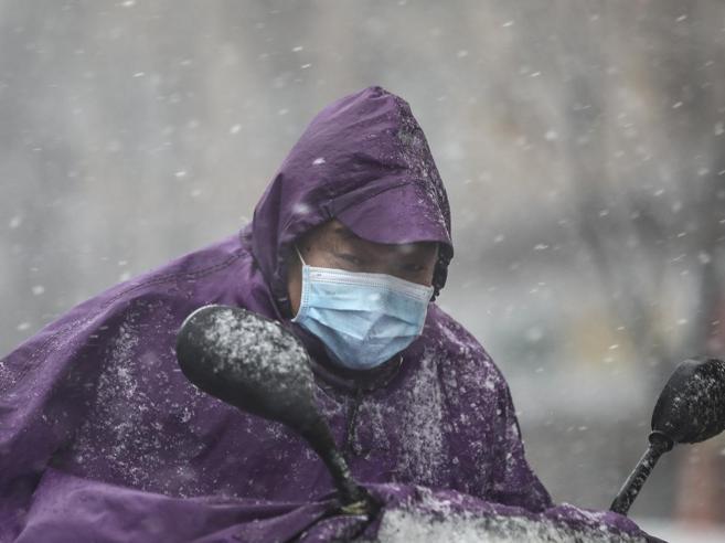 Ilaria Capua: «Africa a rischio coronavirus,  ma questo  morbo girerà il mondo»
