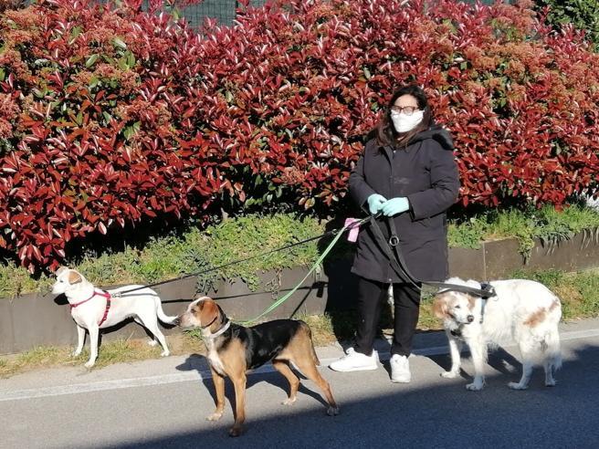 Coronavirus, i volontari di Prato che portano a passeggio i cani di chi è in quarantena