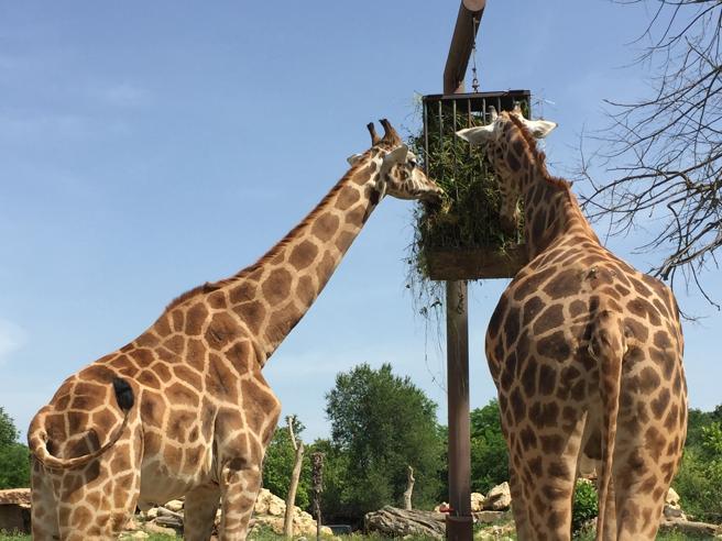 Attività ferme, a rischio i 25 progetti di conservazione delle specie    in pericolo