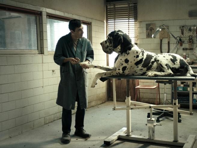 Da «Dogman» a «Joker»: nove film da non perdere su Netflix, Amazon Prime (e non solo)