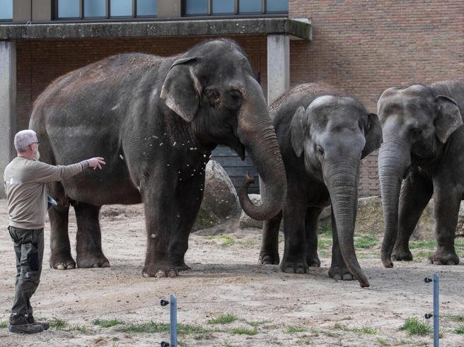 Zoo in crisi: «Potremmo essere costretti a uccidere gli animali e darli in pasto agli altri per sfamarli»