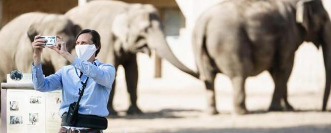 Un'immagine di oggi dallo zoo di Berlino  (foto Epa)