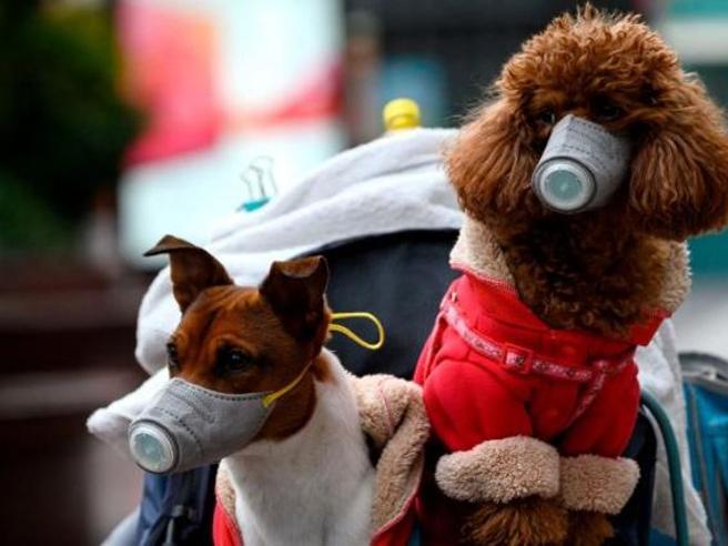 Coronavirus, ma alla fase 2 dei cani chi ci pensa? «Serve gradualità»