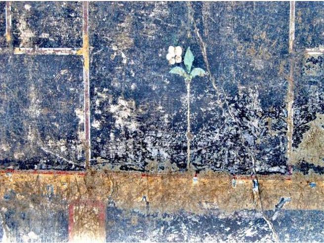 Pompei, nuova scoperta: trovata parete con fiore bianco dedicato a una bambina di  nome Mummia