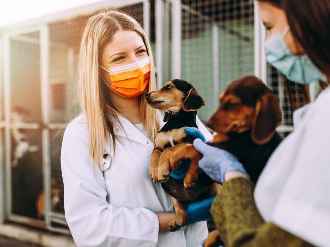 Coronavirus e fase 2, la Lav: «Bonus a chi ha cani e gatti. E aiuti per chi adotta dai rifugi»